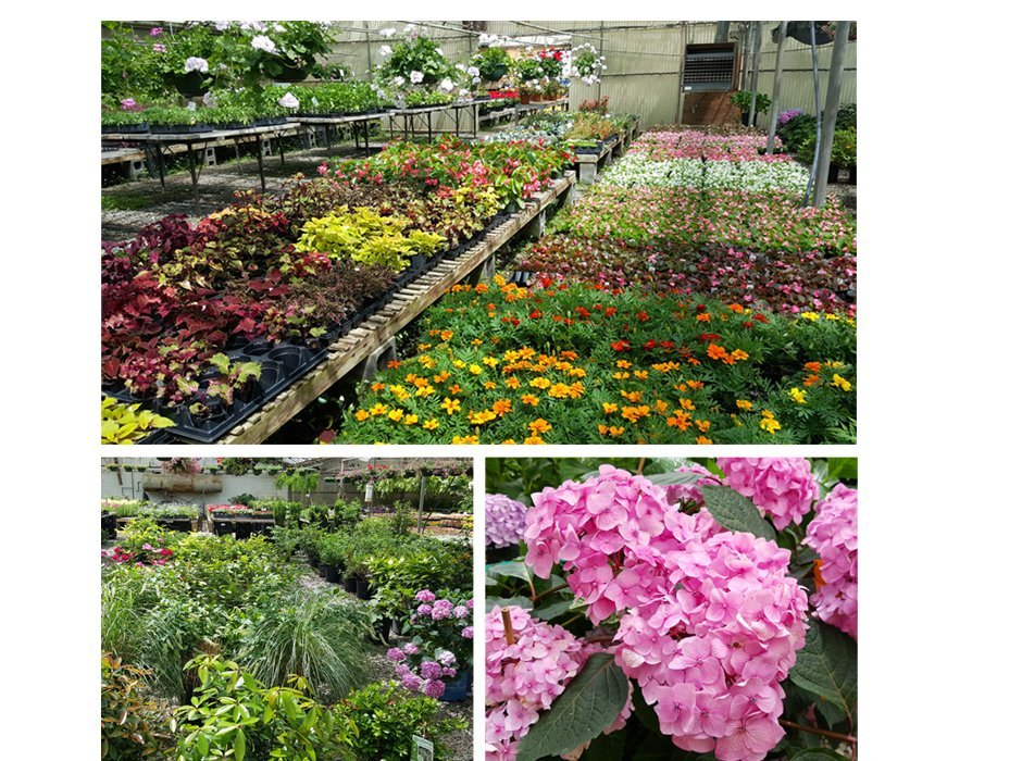 Plants - Kelli Green Garden Center Marietta, GA Nursery