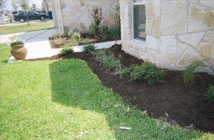 Garden lawn with little plants