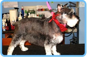 Pets | Shrewsbury, PA | Bark of the Town Pet Salon | 717-235-2275