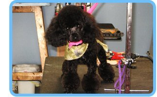 Bath | Shrewsbury, PA | Bark of the Town Pet Salon | 717-235-2275