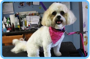 Sanitary trimming | Shrewsbury, PA | Bark of the Town Pet Salon | 717-235-2275