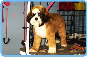 Grooming | Shrewsbury, PA | Bark of the Town Pet Salon | 717-235-2275