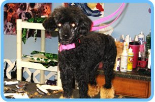 Puppy cuts | Shrewsbury, PA | Bark of the Town Pet Salon | 717-235-2275