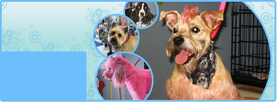Brush out | Shrewsbury, PA | Bark of the Town Pet Salon | 717-235-2275