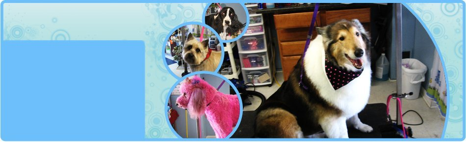Skunk treatment | Shrewsbury, PA | Bark of the Town Pet Salon | 717-235-2275