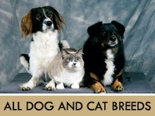 Pet Grooming - Blacksburg, VA - The Village Groomer - dogs and a cat - All Dog and Cat Breeds