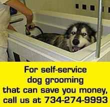 Dog Groomer Ann Arbor Mi Dog O Mat 2 734 274 9993