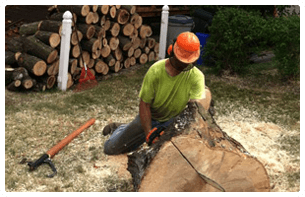 Lumberjack Tree Service | Pittsburgh, PA | Extreem Tree Service | 0