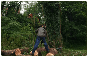 Tree Removal Service | Pittsburgh, PA | Extreem Tree Service