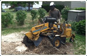 Tree Stump Grinding | Pittsburgh, PA | Extreem Tree Service