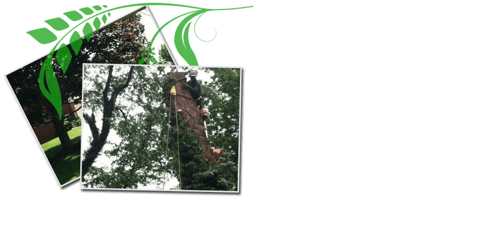 Contact | Pittsburgh, PA | Extreem Tree Service
