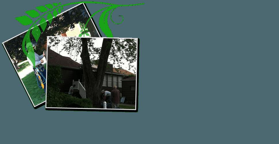 Tree Cutting Service | Pittsburgh, PA | Extreem Tree Service