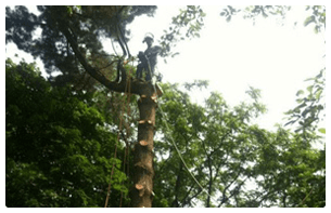 Pittsburgh Landscaping | Pittsburgh, PA | Extreem Tree Service | 0