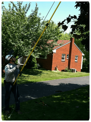 Tree Trimming  Service | Pittsburgh, PA | Extreem Tree Service