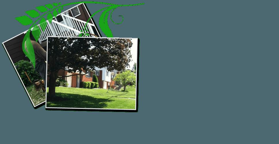 Certified Arborist | Pittsburgh, PA | Extreem Tree Service