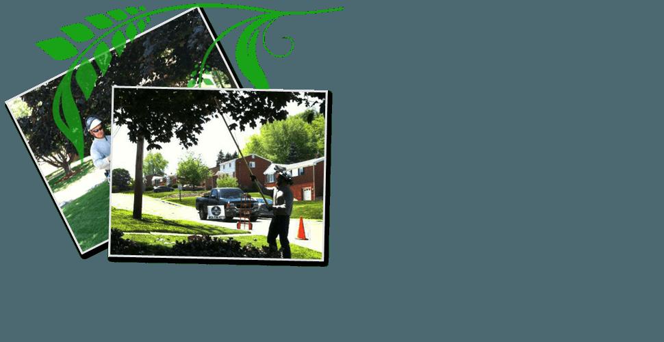 Tree Maintenance | Pittsburgh, PA | Extreem Tree Service