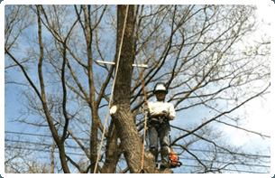 Certified Arborist | Pittsburgh, PA | Extreem Tree Service | 0