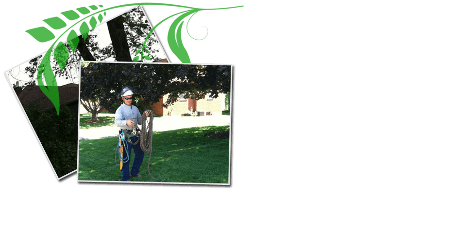 Tree Removal | Pittsburgh, PA | Extreem Tree Service