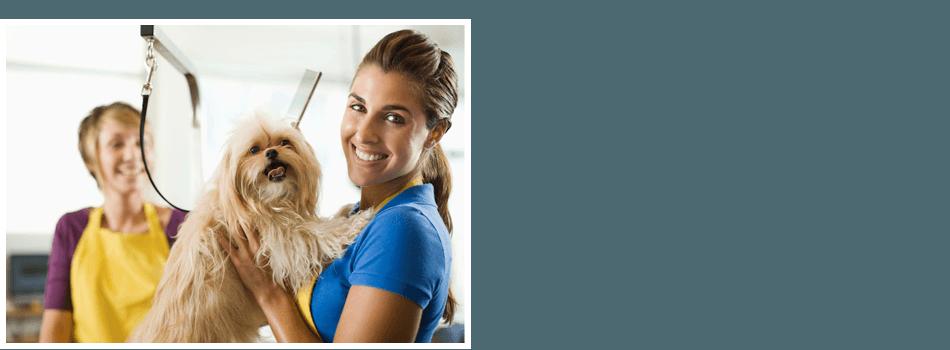 Pet salon services