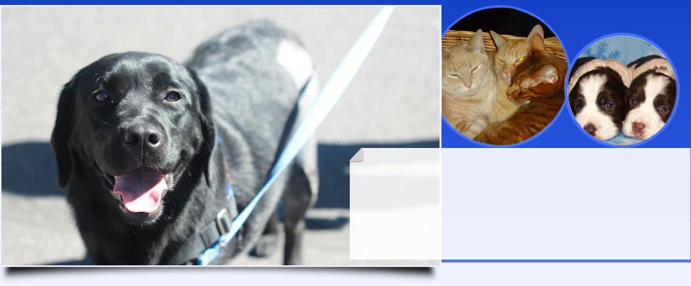 Animal hospital | Klamath Falls, OR | Hullman Veterinary Hospital, LLC | 541-883-3449