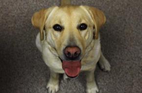 Behavior medications | Klamath Falls, OR | Hullman Veterinary Hospital, LLC | 541-883-3449