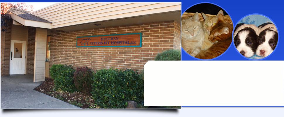 Pet abdominal surgery | Klamath Falls, OR | Hullman Veterinary Hospital, LLC | 541-883-3449