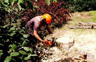 edging   Leola, PA   Fesko Lawn Works LLC   717-293-5094