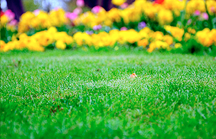 PA yard work | Leola, PA | Fesko Lawn Works LLC | 717-293-5094