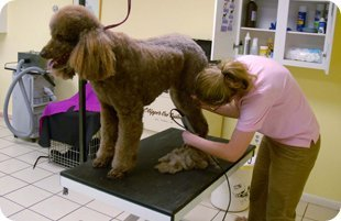 dog salon | Mansfield, TX | Smoochable Pooch Mobile Pet Salon | 682-422-3352