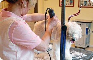 pet undercoat removal | Mansfield, TX | Smoochable Pooch Mobile Pet Salon | 682-422-3352