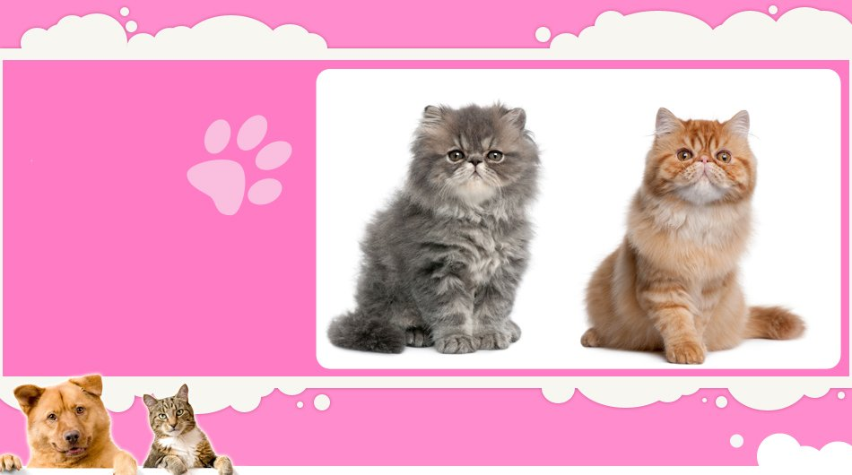 cat grooming | Mansfield, TX | Smoochable Pooch Mobile Pet Salon | 682-422-3352