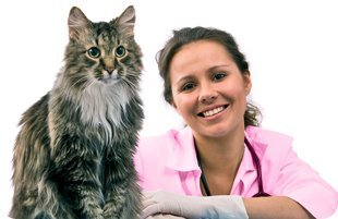 felines | Mansfield, TX | Smoochable Pooch Mobile Pet Salon | 682-422-3352