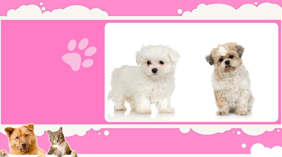 pet care | Mansfield, TX | Smoochable Pooch Mobile Pet Salon | 682-422-3352