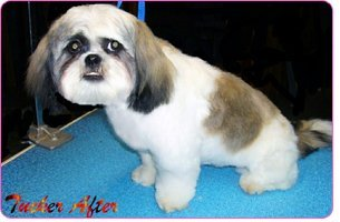 animal services | Mansfield, TX | Smoochable Pooch Mobile Pet Salon | 682-422-3352