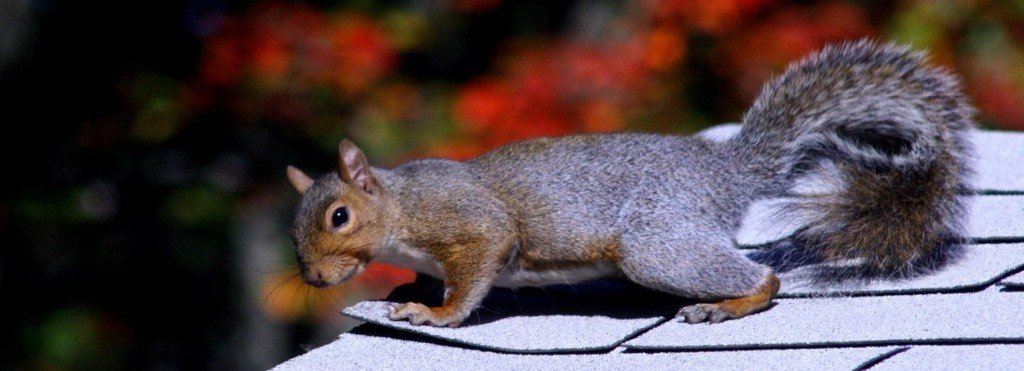 4 Most Common Animals That Can Get Into Chimneys