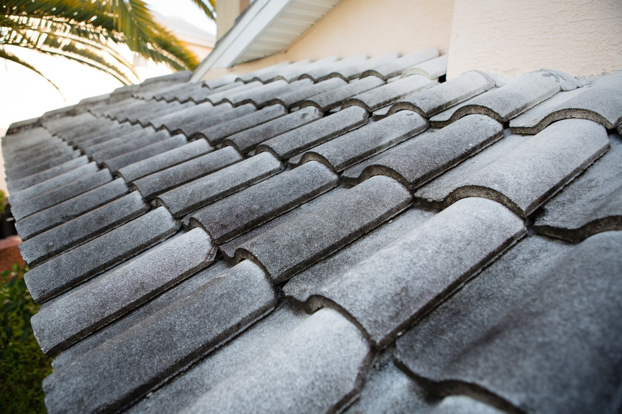3 Signs There S A Mold Infestation On Your Roof