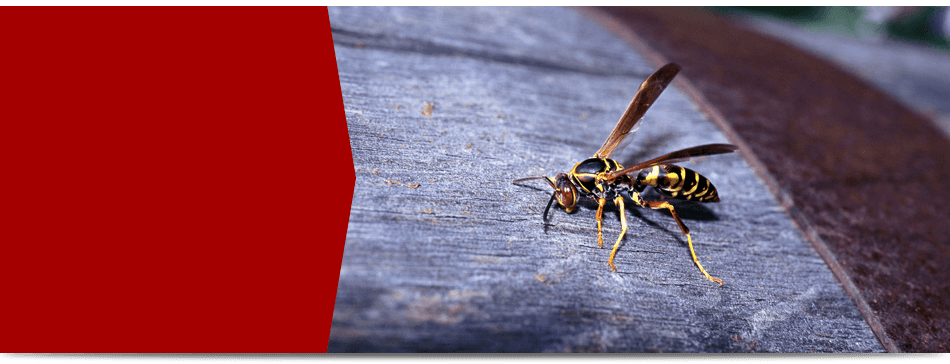 Contact Us for Pest Control Service
