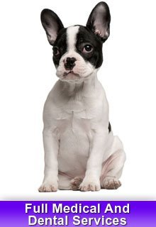Veterinarian Services - Rosenberg, TX   - Rosenberg Veterinary Clinic