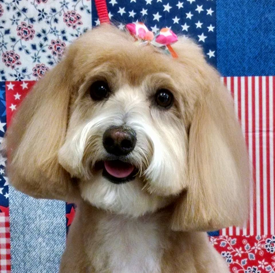 Dog Grooming The Villages Fl