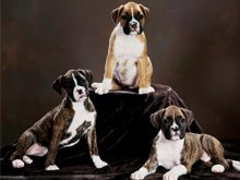 Pet Grooming Services - Columbus, IN - Teresa's Dog Grooming