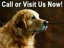 Pet Care - South Northfield, MN - Canine Design - Fluff Drying - Call or Visit Us Now!