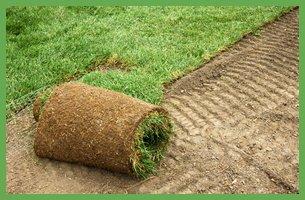 Sod vs Seed |  Bowling Green, KY | Iron Bridge Sod Farms | 270-781-8873