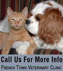 Vet Clinic - Gallipolis, OH - French Town Veterinary Clinic