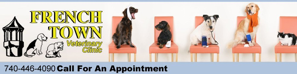 Veterinary Clinic - Gallipolis, OH - French Town Veterinary Clinic