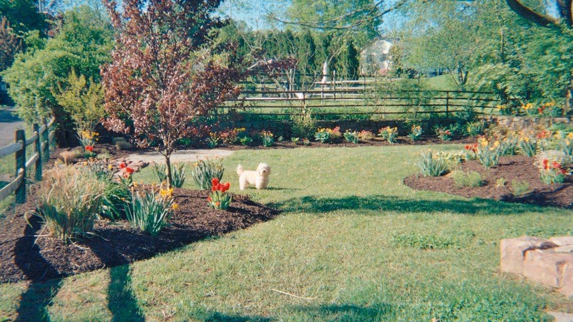 Puppy yard