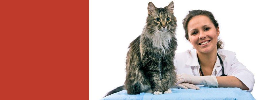 Emergency veterinarian | Topeka, KS | Emergency Animal Clinic of Topeka | 785-272-2926