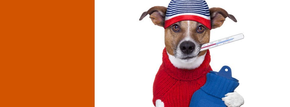Acute pet illnesses | Topeka, KS | Emergency Animal Clinic of Topeka | 785-272-2926
