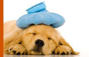Animal hospital | Topeka, KS | Emergency Animal Clinic of Topeka | 785-272-2926
