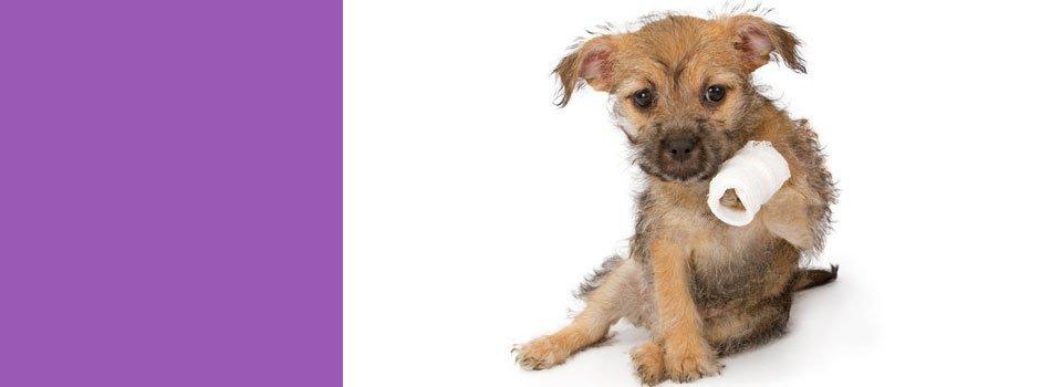 Acute pet surgeries | Topeka, KS | Emergency Animal Clinic of Topeka | 785-272-2926