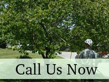 Tree Experts - Hadley, NY - Buddy's Tree Service